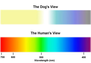 Two color spectrums, one on top showing a dog's view and one on the bottom showing the human's view